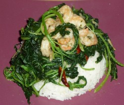 CF29of60 asian spinach n shrimps4